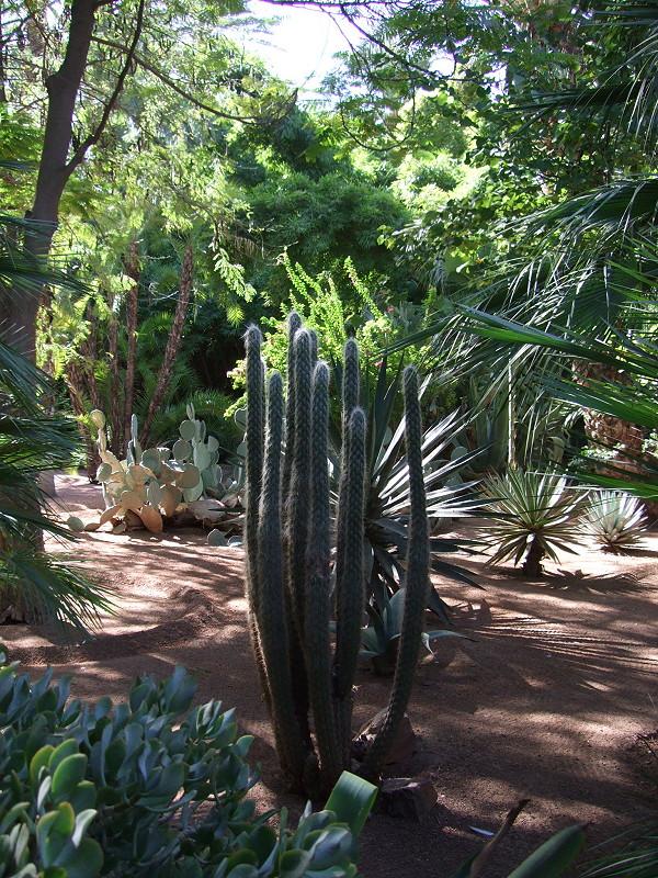 Marjorelle gardens.4JPG