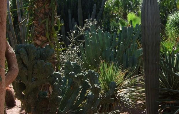 Marjorelle gardens.5JPG