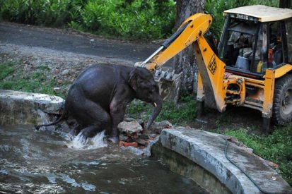 elephant-rescue_1984445i